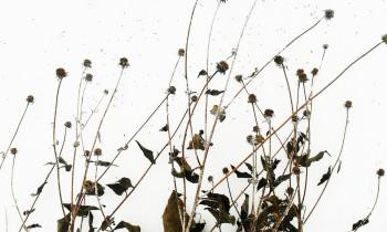 Herbes neige