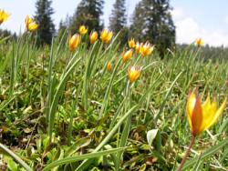 flore du vercors